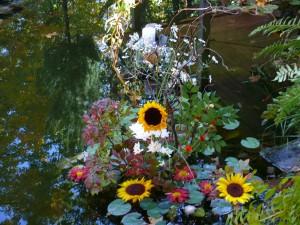 a water garden